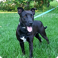 Adopt A Pet :: Arnold - New Oxford, PA