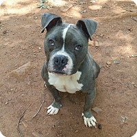Adopt A Pet :: Jessie - Lawrenceville, GA