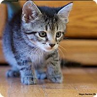 Adopt A Pet :: Black Jack - Marietta, GA