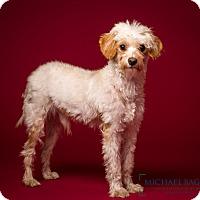 Adopt A Pet :: Landry - MEET ME - Norwalk, CT
