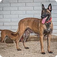 Adopt A Pet :: Felicity - Phoenix, AZ