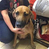 Adopt A Pet :: Olivia - Matawan, NJ