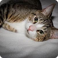 Adopt A Pet :: Watson - Plant City, FL