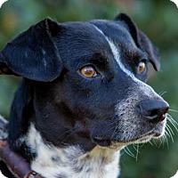 Adopt A Pet :: Clark - San Diego, CA