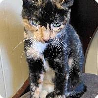 Adopt A Pet :: Belinda - Sauk Rapids, MN
