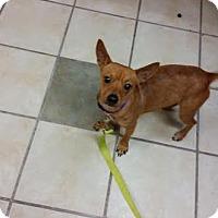 Adopt A Pet :: Red - Chippewa Falls, WI