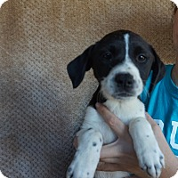 Adopt A Pet :: Lulu - Oviedo, FL