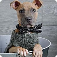 Adopt A Pet :: Benny - Denver, CO