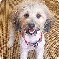 Adopt A Pet :: Teddy - Garland, TX