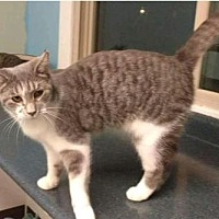 Adopt A Pet :: Dot - mishawaka, IN