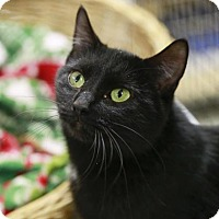 Adopt A Pet :: Merry Mary - Kettering, OH