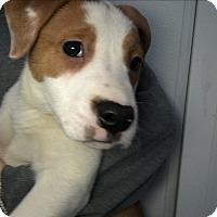 Adopt A Pet :: Henry - Manteca, CA