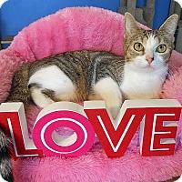 Adopt A Pet :: Ella - Glendale, AZ