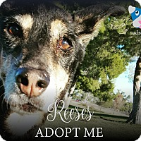 Adopt A Pet :: Reeses (Pieces) - Tucson, AZ