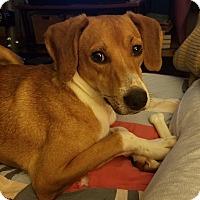 Adopt A Pet :: Jenkins (Neutered) - Marietta, OH