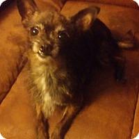 Adopt A Pet :: Gidget - Hagerstown, MD
