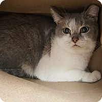 Adopt A Pet :: Charlotte - Middletown, OH