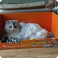 Adopt A Pet :: Teddy - Catasauqua, PA