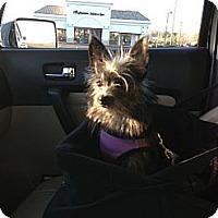 Adopt A Pet :: Toto - Rescue, CA