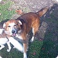 Adopt A Pet :: Murphy - Hazard, KY
