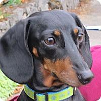 Adopt A Pet :: SAMMIE - Portland, OR