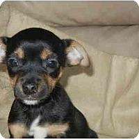 Adopt A Pet :: Killer - Braintree, MA