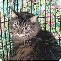 Adopt A Pet :: Sparkle - Colmar, PA