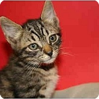 Adopt A Pet :: MEGAN - SILVER SPRING, MD