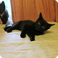 Adopt A Pet :: MACADAMIA - Acme, PA