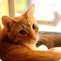 Adopt A Pet :: George - Tustin, CA
