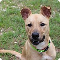 Adopt A Pet :: Alibi - Smyrna, GA