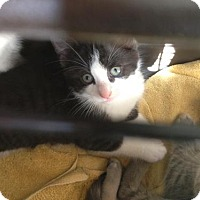 Adopt A Pet :: Clint - Caistor Centre, ON