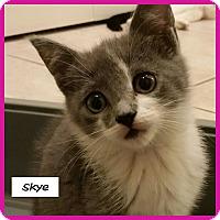 Adopt A Pet :: Skye - Miami, FL