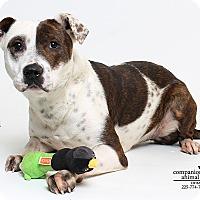 Adopt A Pet :: Poppy - Baton Rouge, LA