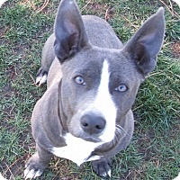 Adopt A Pet :: Daisy Duke - Modesto, CA