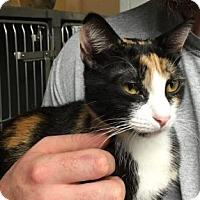 Adopt A Pet :: Dietri - Voorhees, NJ