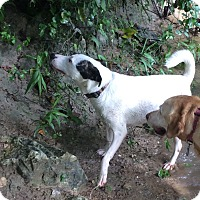 Adopt A Pet :: Petey in Austin - San Antonio, TX