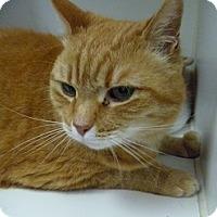 Adopt A Pet :: Miss Clara - Hamburg, NY