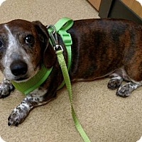Adopt A Pet :: Dixie- Adoption Pending - Fairfield, OH