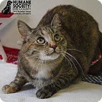 Adopt A Pet :: TOOTSIE SUE - Sandusky, OH