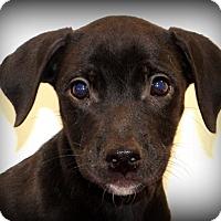 Adopt A Pet :: Artie - Glastonbury, CT