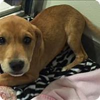 Adopt A Pet :: Jingle - Charlottesville, VA