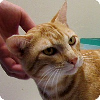 Adopt A Pet :: Allistair - Grinnell, IA