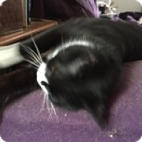 Adopt A Pet :: Herbie - Manchester, CT