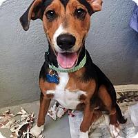 Adopt A Pet :: Custard - Adopted! - San Diego, CA