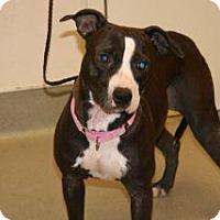 Adopt A Pet :: Marsha - Wildomar, CA