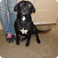 Adopt A Pet :: Maura - Jacksonville, TX
