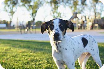 Pointer Mix Dog for adoption in Salt Lake City, Utah - Dock