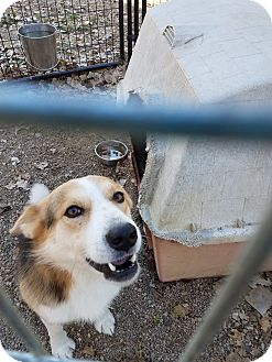 Beagle Mix Dog for adoption in Walthill, Nebraska - Jimmy