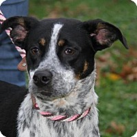 Adopt A Pet :: Athena- NEEDS ADPOTER OR FOSTE - Union Grove, WI